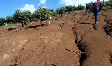 Frena Profepa actividades ilegales de cambio de uso de suelo en 14 predios en San Gabriel, Jalisco