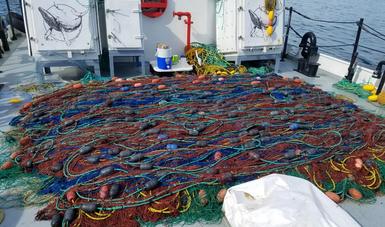 En nuevo operativo, extrae Profepa otras 13 redes totoaberas en el Alto Golfo de California