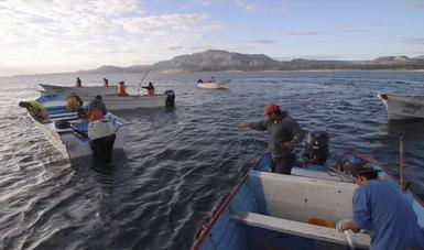 El propósito de la NOM es promover la conservación, preservación e inducir al aprovechamiento sustentable de las poblaciones de flora y fauna acuática de las aguas de jurisdicción federal.