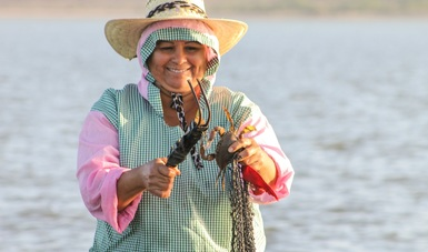 La jaiba constituye una de las principales pesquerías del país, al contribuir con la economía regional de las entidades en donde se captura.