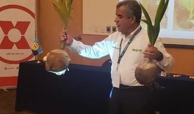 Diversas alternativas fueron expuestas para evitar la pérdida del coco