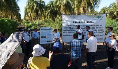 Quintana Roo, sede de taller especializado en cocotero