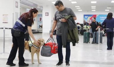 Con el objetivo de resguardar el patrimonio agroalimentario de México, 107 oficiales y 100 unidades caninas  laboran en Oficinas de Inspección Sanitaria (OISA) y en diversos Puntos de Verificación e Inspección Federal.