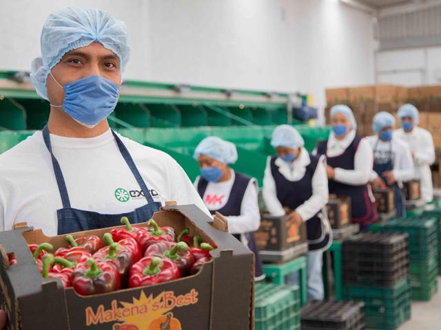 México ligó por séptimo mes consecutivo un superávit en su balanza comercial de bienes agroalimentarios con el mundo, lo que revierte una tendencia de más de 20 años de déficit.