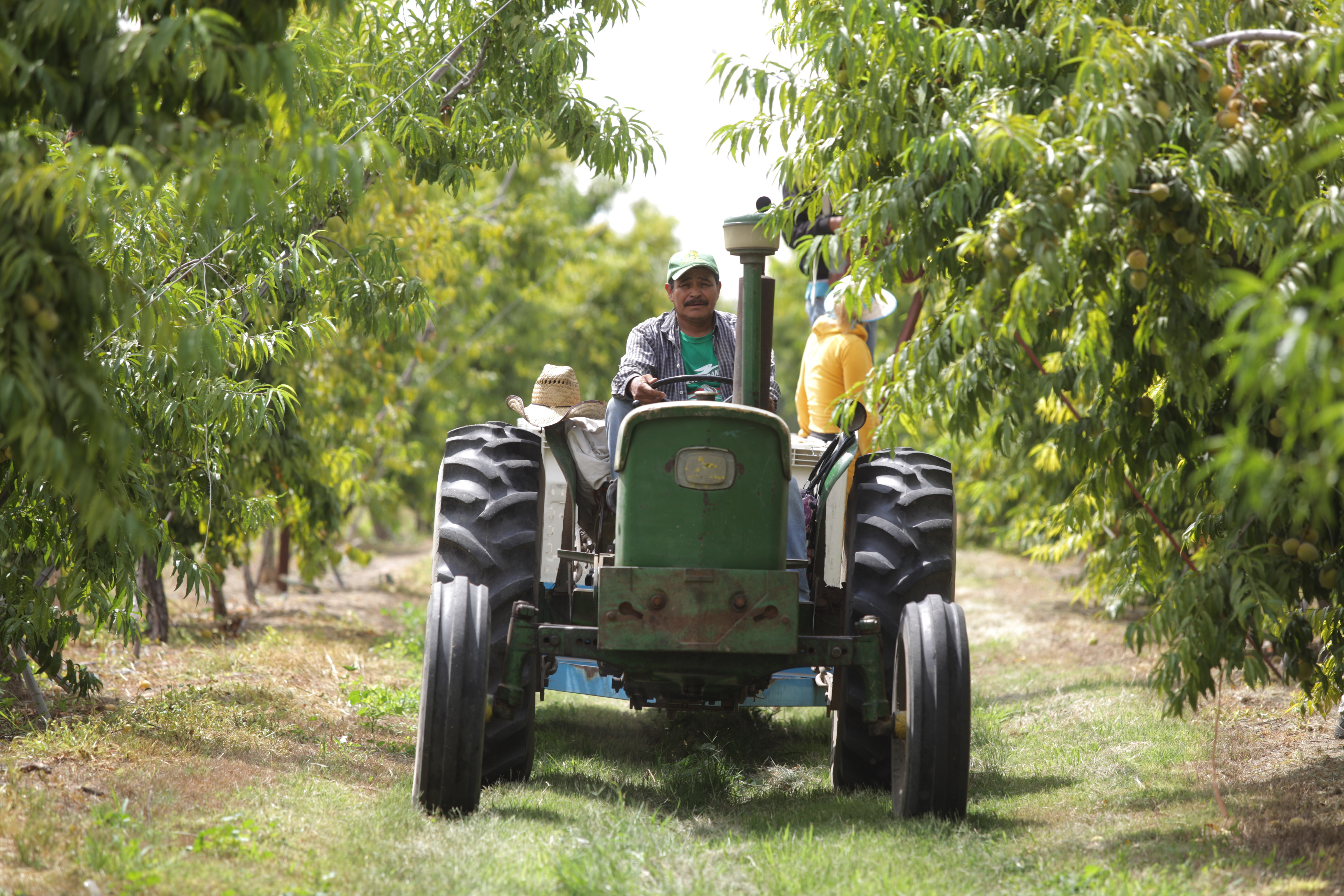 Actualmente, opera en 57 municipios  de 20 entidades del país, con paquetes de huertos y granjas familiares; infraestructura, equipamiento, animales menores y materiales para huertos comunitarios.