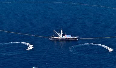Inicia temporada de pesca de atún en el océano Pacífico.