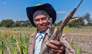 Promueven Agricultura y CIMMYT alternativas agronómicas para el manejo del rastrojo y evitar quemas agrícolas.