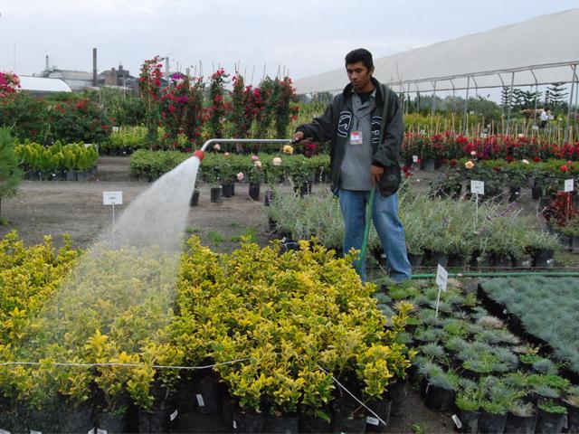 El SENASICA impartió el Taller de Formación de Auditores, Criterios y Conceptos, con el objetivo de fortalecer la implementación de Sistemas de Reducción de Riesgos de Contaminación (SRRC) en la producción de alimentos de origen vegetal.