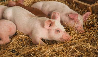 La aplicación para dispositivos móviles AVISE, facilita la notificación de síntomas en los animales que pudieran significar la presencia de enfermedades exóticas en una granja o unidad productiva.