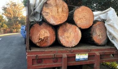 Dos vehículos y materias primas forestales asegurados por Profepa en Milpa Alta