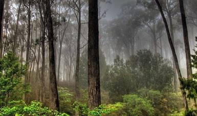 El sector forestal mexicano cuenta con un enorme potencial biológico, económico, pero principalmente social.