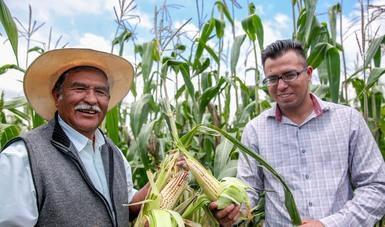 Mantiene Producción para el Bienestar entrega de apoyos a los productores, a pesar del COVID-19: Agricultura