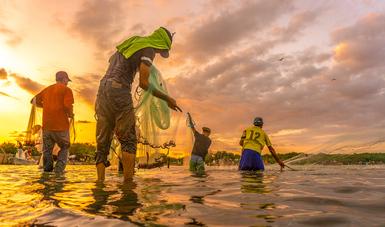 Adelantará Gobierno de México incentivos del Componente de Apoyo para el Bienestar de Pescadores y Acuicultores (Bienpes...