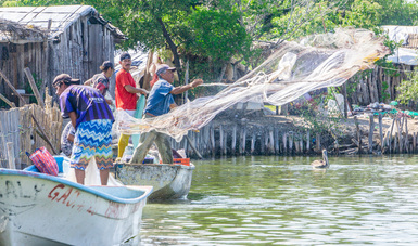 Este año se cuadruplicará el número de beneficiarios y el monto asignado. En 2019, el Bienpesca ejerció 360.7 millones de pesos, en favor de 50 mil 094 productores; cada uno recibió, de manera directa, siete mil 200 pesos