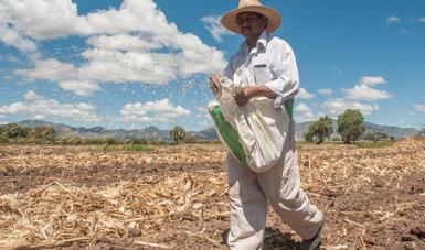 Responde Agricultura al llamado de líderes globales para asegurar disponibilidad de alimentos.
