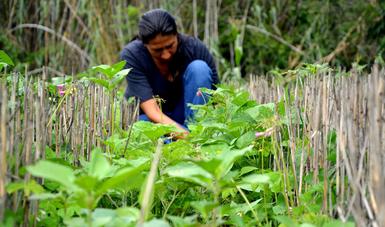 En Iniciativa Frijol para México, la clave es la integración de la cadena productiva: Agricultura.