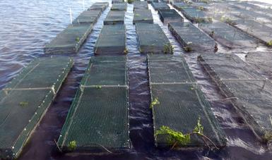 Activa Agricultura programa que incentiva desarrollo de la acuicultura para los pequeños productores.