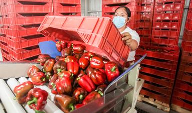 Refuerzan medidas internacionales de prevención por COVID-19 en el sector agroalimentario