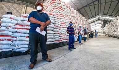 El campo no se detiene: más de 53 mil productores han recibido fertilizantes en Guerrero.
