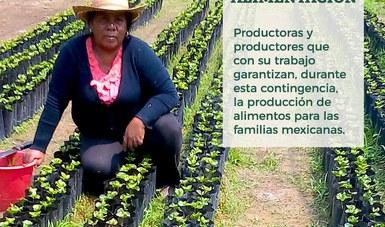 Fortalecen Agricultura y cadenas productivas acciones para asegurar producción y abasto de alimentos, en el marco de la emergencia sanitaria por COVID-19.
