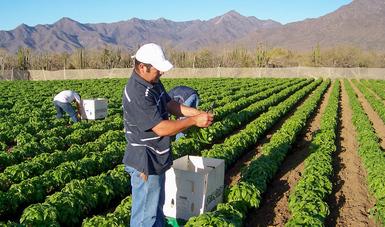Cambios en Lineamientos de Producción Orgánica fortalecerán el comercio internacional