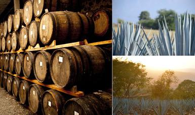 Imagen de barriles y plantas de agave