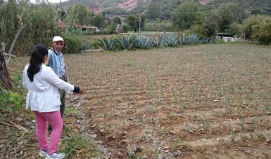 """En el marco del Día Mundial de la Lucha contra la Desertificación y la Sequía, celebrado bajo el lema """"Alimentos, forrajes, fibra"""", destacó que Agricultura desarrolla ciencia aplicada al campo y promueve prácticas agrícolas sustentables."""