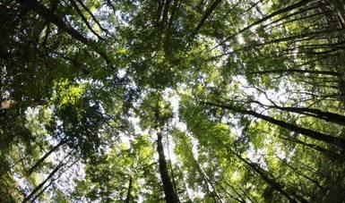 León Jorge Castaños Martínez, participó como ponenteen un Diálogo de Alto Nivel entre Jefes de Servicios Forestales tituladoReconstruir mejor: Contribuciones del sector forestal a la recuperación tras la pandemia del Covid-19.