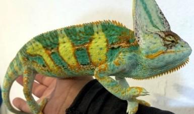 Emite Profepa dictamen técnico por posesión ilegal de 32 reptiles en la ZMVM