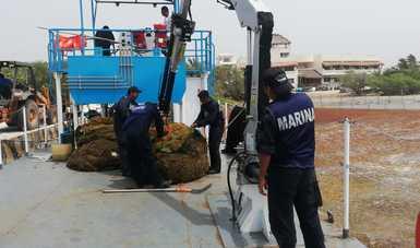 Personal Naval realizando labores de recolección de Sargazo
