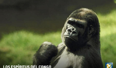 La cuenca del Congo es el último bastión de naturaleza libre frente a la imparable expansión del ser humano.