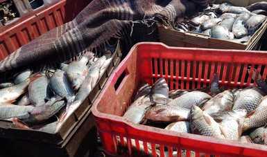 Logran operativos de inspección retención precautoria de 11.3 toneladas de producto pesquero durante mayo