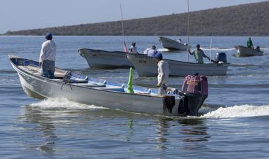 La Comisión Nacional de Acuacultura y Pesca (Conapesca) reconoce en el Día Internacional del Cooperativismo, hoy 4 de julio, la relevancia de las cooperativas pesqueras en México, al ser la base de la economía de miles de familias en el país.