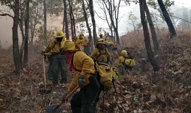 Combatientes de incendios forestales
