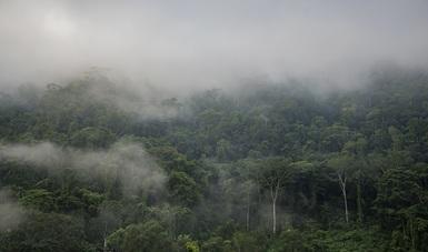 De las casi 66 millones de hectáreas de bosques que tiene el país, la Conanp administra 7.7 millones de hectáreas