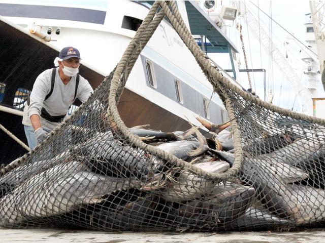El comisionado nacional de Acuacultura y Pesca, Mario Aguilar Sánchez, participó en una Audiencia de la Organización Mundial de Comercio (OMC), vinculada con la disputa México–Estados Unidos sobre el embargo atunero.