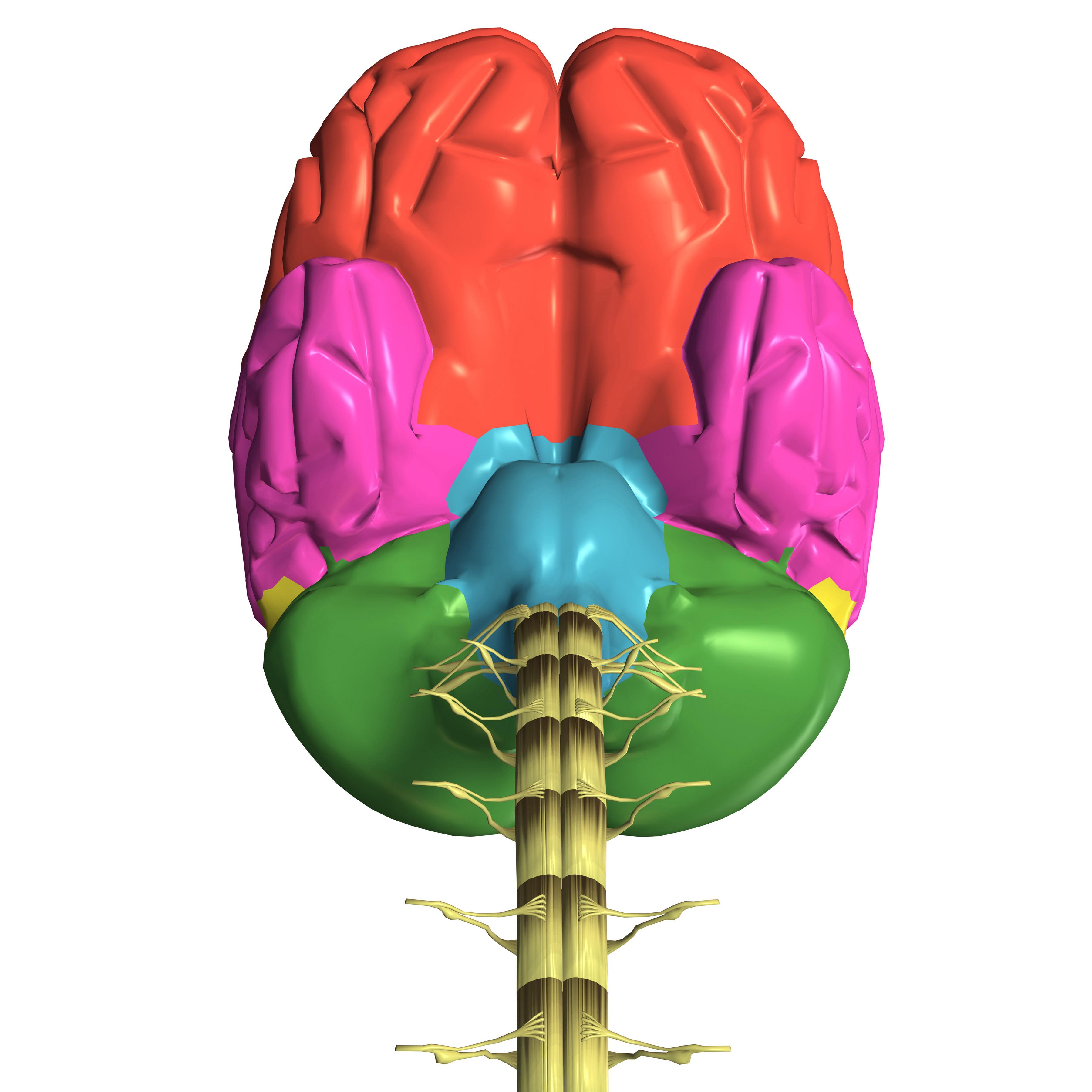 """Presentan libro """"Genealogía de la mente humana""""."""