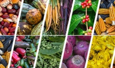 Redes Alimentarias Alternativas