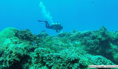 Arrecifes de Cozumel.  Blanca Quiroga/Archivo Conanp