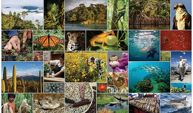 biodiversidad es bienestar