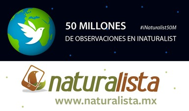 La red internacional de ciencia ciudadana INaturalist alcanza 50 millones de observaciones de naturaleza