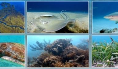 protocolos de monitoreo marino