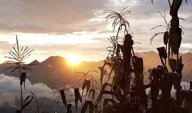 Acuerdan CONABIO y legisladores de Oaxaca construir una agenda conjunta para impulsar la conservación de la agrobiodiver...