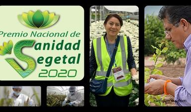 Agricultura premia cada año a profesionales que han contribuido en la prevención, control y erradicación de plagas de los vegetales en México.