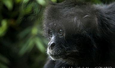 CONABIO y la Asociación de Zoológicos, Criaderos y Acuarios de México firman acuerdo