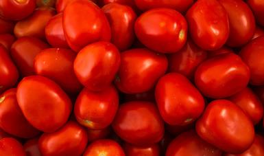Las exportaciones agroalimentarias alcanzaron los 29 mil 323 millones de dólares, de las cuales, 13 mil 862 millones de dólares corresponden al ámbito agropecuario y 15 mil 461 millones de dólares al agroindustrial.