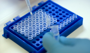 La Secretaría de Agricultura impulsa el uso adecuado de los antimicrobianos para el tratamiento de enfermedades infecciosas en animales con medicamentos eficaces, seguros y de calidad.