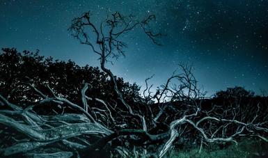 Fotografía ganadora de la categoría paisaje forestal