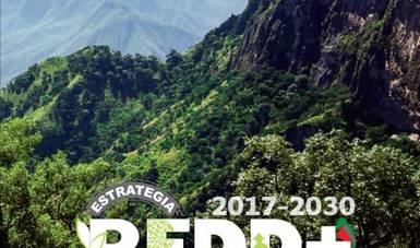 la Secretaría de Medio Ambiente y Recursos Naturales (Semarnat), la Camisón Nacional Forestal (Conafor) y la Secretaría de Agricultura y Desarrollo Rural (Sader) se reunieron con los representantes de siete estados avanzados REDD+