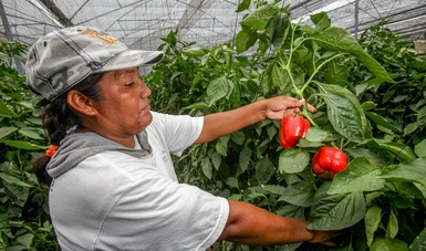 El comercio total agroalimentario entre el país y el resto de sus socios comerciales alcanzó los 60 mil 373 millones de dólares, de los cuales el 59.5 por ciento corresponden a las ventas mexicanas.